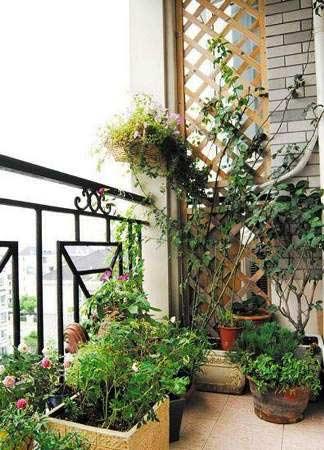 客厅阳台装修效果图:花艺的装饰,绝对为阳台增添亮点.