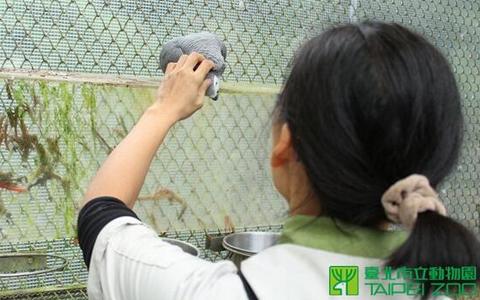 埃博拉病毒鸟类遭走私进台湾 台北海关推卸责任