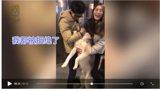 台湾一哈士奇犬向小母狗求爱被拒哭倒主人怀里