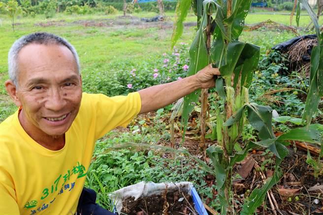 1棵玉米秆长4根玉米 屏东县自然农业示范基地见成效