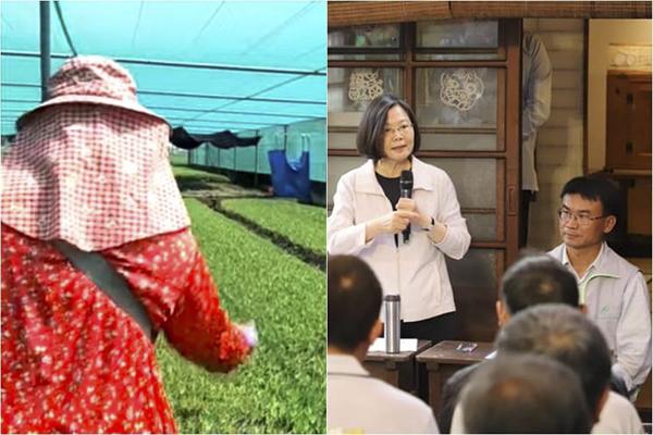"""宣布肥料降20元新台币 菜农呛蔡英文""""政策买票"""""""