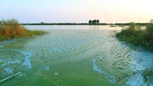 太湖蓝藻五月暴发,环保部申请遥感卫星连续多日监测.jpg