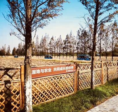 天福国家湿地公园_副本.jpg